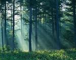 forest-light-900