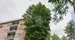 alberovia costantinoRID