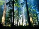 alberitantiRID