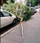 alberocadutoprati
