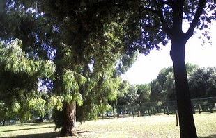 parco-fao-roma
