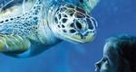 SEA LIFE Roma Aquarium official