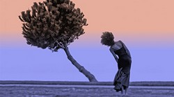 resilienza-albero