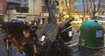 albero caduto monteverd repertorio