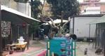 oasi felina azalea