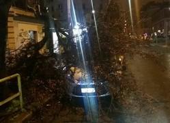 albero caduto ostiense