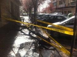albero caduto via avicenna