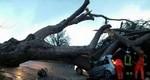 pino laurentina omniroma