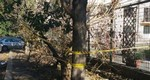 segnalazione albero garbatella