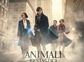 cinema 141 - Animali fantastici e dove trovarli