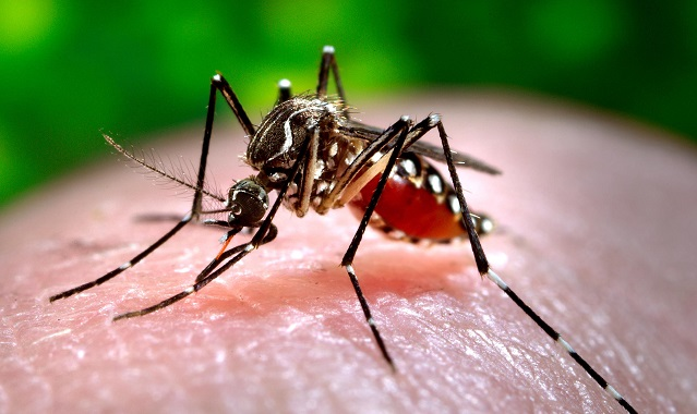 Virus Chikungunya, 17 i casi nel Lazio, 6 nella Capitale